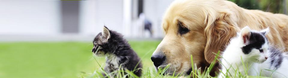 dog laying on grass with two kittens