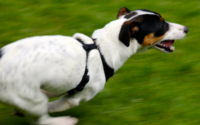 image for Zoomies, FRAPs, Puppy Freak Outs!